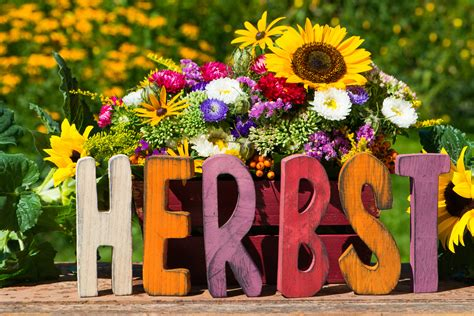 Blumenzwiebeln Einpflanzen Der Herbst Ist Die Richtige Zeit by Der Herbst Ist Da Kreitl E U