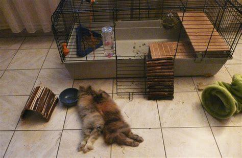 maison pour lapin grande maison pour lapin