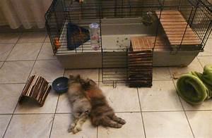 Maison Pour Lapin : cage pour lapin ~ Premium-room.com Idées de Décoration