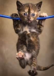 hanging cat the difference between don t give up and hang in there