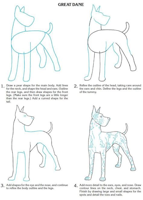 images  drawing step  step  pinterest