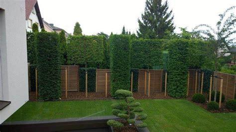Gartengestaltung Modern Sichtschutz by Spalierb 228 Ume Geschnittene S 228 Ulenb 228 Ume Hecke Am Laufenden