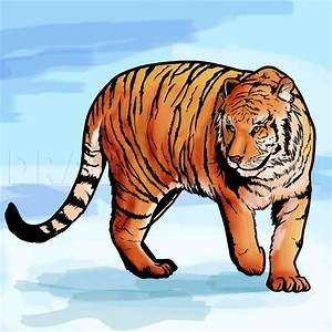 How To Draw A Bengal Tiger  Draw Tigers  Step By Step