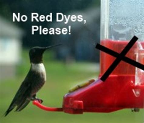 make hummingbird food nectar stop buying it