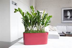 Choosing the greatest indoor plants for your interior for Interior decorating houseplants