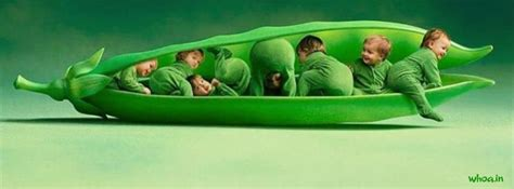 green color babies facebook cover