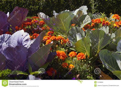 Organic Kitchen Garden Definition by Organic Kitchen Garden Stock Image Image Of Plant