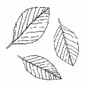 Blätter Vorlagen Zum Ausschneiden : malvorlagen window color vorlagen ausmalbilder jahreszeiten ~ Lizthompson.info Haus und Dekorationen