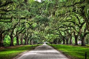 Boone Hall Plantation - Clio