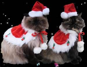 cat santa costume santa costume cape and santa hat for cats and dogs