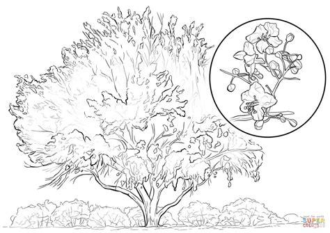 Kleurplaat Nooyer by Yellow Palo Verde Coloring Page Free Printable Coloring