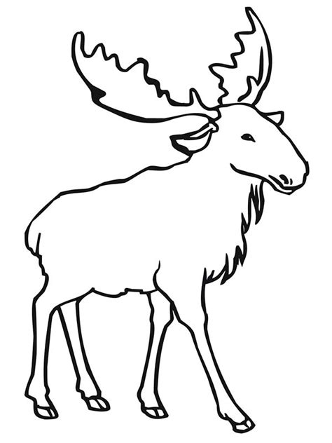 moose coloring pages coloringpages