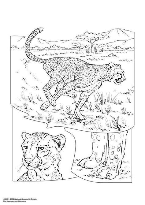 Cheetah Kleurplaat by Kleurplaat Cheetah Afb 3051 Images