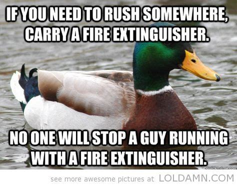 Funny Duck Meme - pin by lol damn on words and sayings pinterest