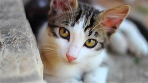 Katzen Fernhalten Von Möbeln : wohin mit der katze im urlaub tierpension und co ~ Sanjose-hotels-ca.com Haus und Dekorationen