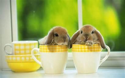 Bunny Wallpapers Rabbit Bunnies Rabbits Adorable Very