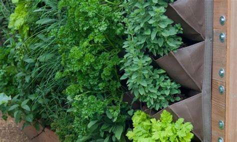 diy vertical vegetable garden