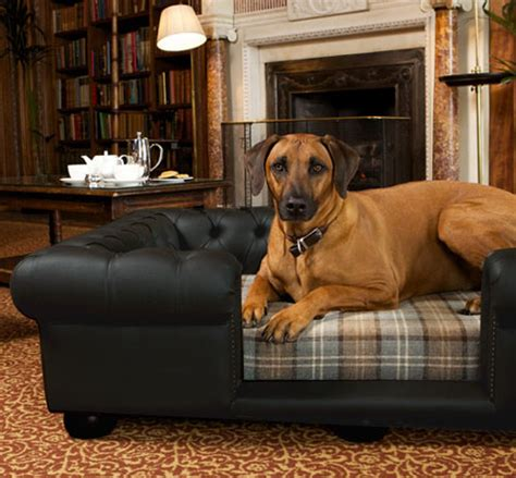 Hund Auf Sofa by Balmoral Black Leather Bed Real Or Faux Leather