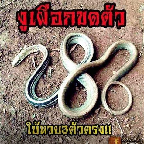 หวย เช็ค ตรวจหวย ผล สลากกินแบ่งรัฐบาล งวดประจำวันที่ 1 มิถุนายน 2564 เช็ครางวัล ลอตเตอรี่ 1/6/64 พร้อมรายละเอียดรางวัลต่างๆ ที่นี่ เลขเด็ด หวยดัง - หวยไทยรัฐ 1 มิถุนายน 2564...   Facebook