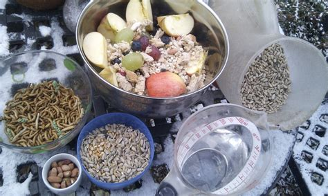 diy how to make suet winter bird feeders inhabitat
