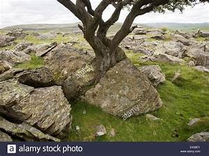 Biotic weathering as growing tree splits rock apart ...