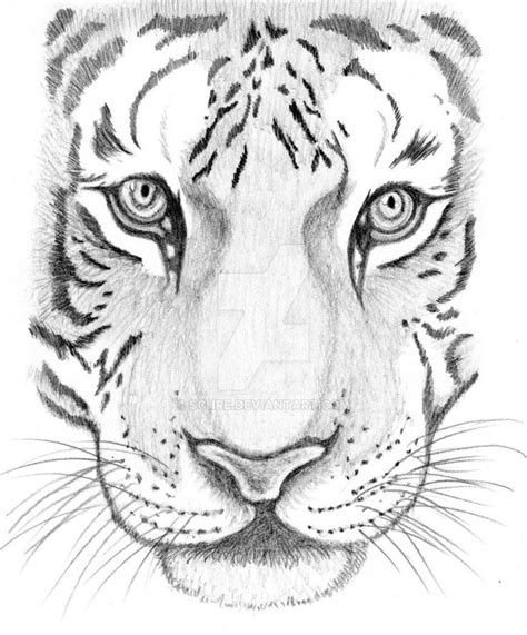 draw  tiger face step  step google search