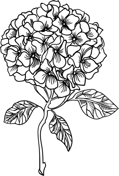 hydrangea stamp simply stamps