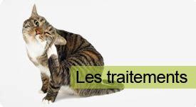 traitement anti puce de l habitat sur puce tique chat