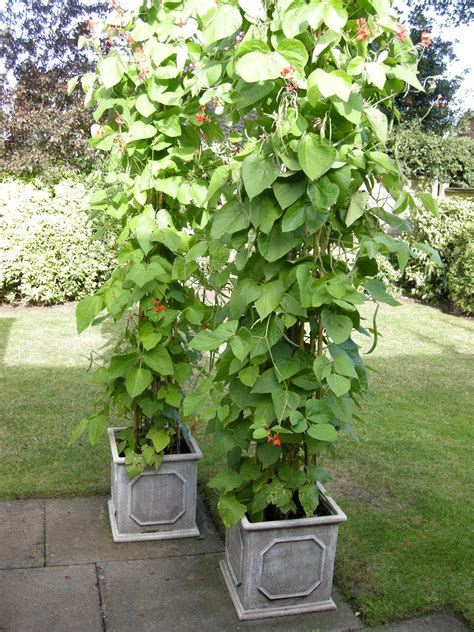 garden in a can 6 vegetables you can plant with small pots even if you