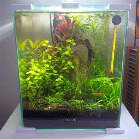 quel aquarium pour un poisson 28 images quel poisson choisir pour un petit aquarium