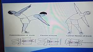 Manual Mobilization Of Joints Chapter 1spinal Movements