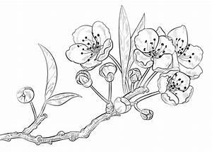Kirschblten Malvorlage Ausmalbilder Von Blumen