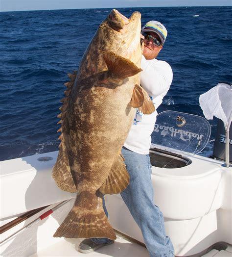 grouper goliath gulf mexico fishing west record key florida charter reef keys charters jan