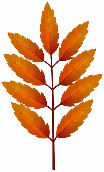 Branch Leaves Clipart Orange Autumn Fall Yopriceville