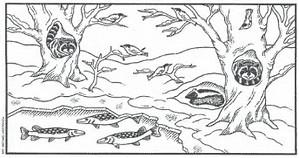 HD wallpapers coloring pages of animals hibernating pawacomdesign