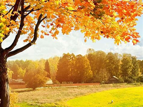Autumn Leaves Fall Backgrounds Powerpoint by Three Autumn Fallen Leaves Powerpoint Background Picture
