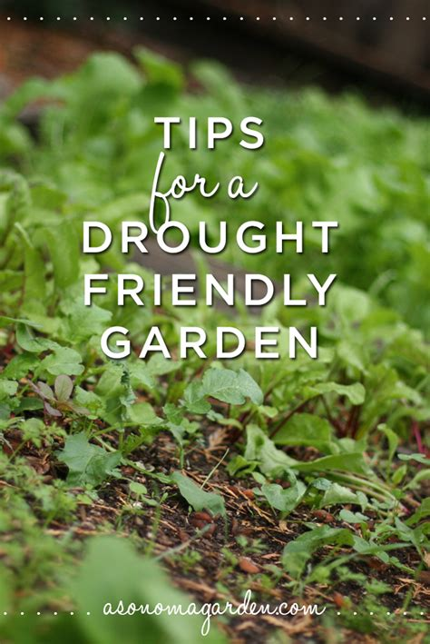 tips for a drought friendly vegetable garden