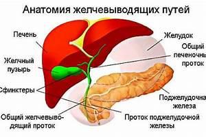 Желчегонные препараты при застое желчи в печени