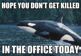 Whaling Meme - weekend aquarium meme roundup aquanerd