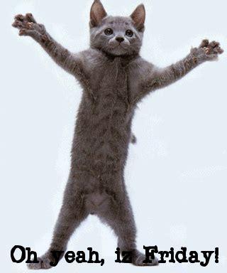 Happy Friday Cat Dance