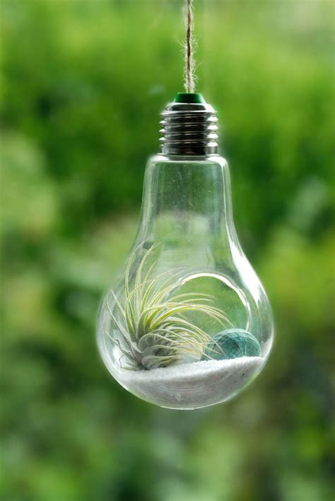 flowers in light bulbs lightbulb air plant hanging terrarium by dingading
