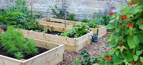 How Does Your Garden Grow Lab by The Five Easiest Vegetables To Grow Which