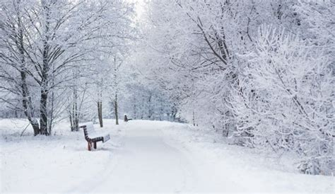 snowy woodland path wall mural wallpaper