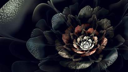 Rose Wallpapers Night Roses Pixelstalk Landscape Nature
