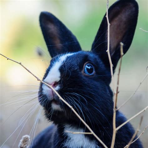 Rabbit by Maksims Novikovs   Rabbit, Animals, Photo