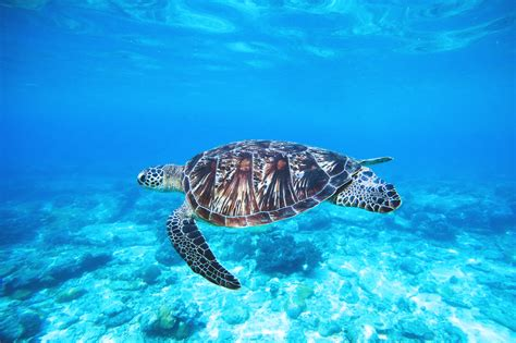 ocean turtle  stock photo iso republic