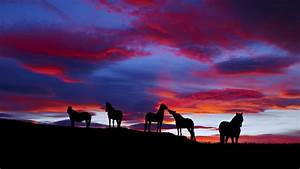 Animals Wallpaper HD - Horse Sunset Wallpapers Full Hd at ...