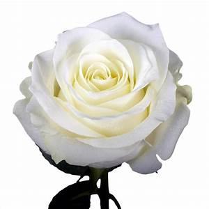 Globalrose 50 White Roses- Fresh Flower Delivery-50 ...