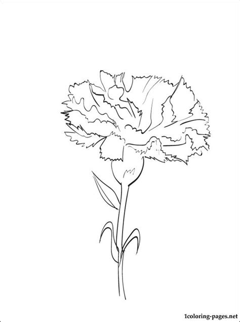 Azuzena Flower Template by Coloring Page Carnation Coloring Pages