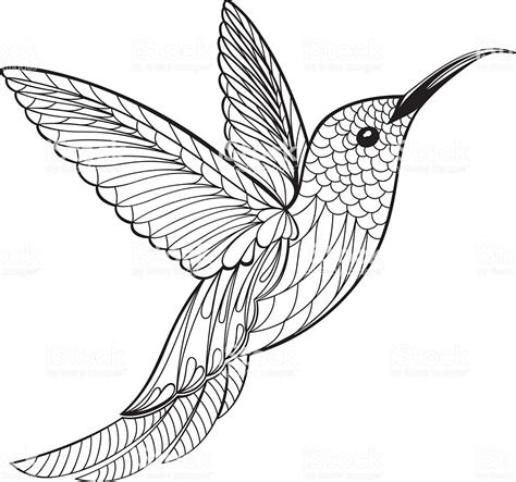 Coloring Vector by Coloring Page Hummingbird Stock Vector More Images
